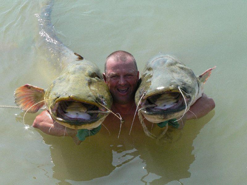 Catfish, River Ebro, Caspe, Spain
